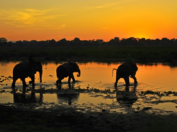 Chitwan National Park 1 Night 2 Days