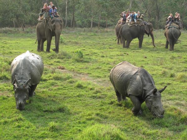 Chitwan National Park 1 Night 2 Days