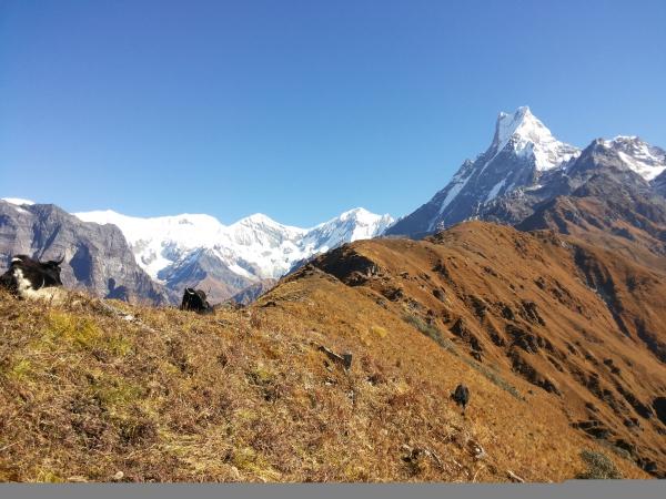 Mardi Himal 5555m.