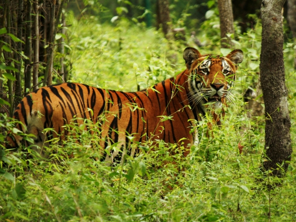 Bardiya National Park 2 Nights/3 Days