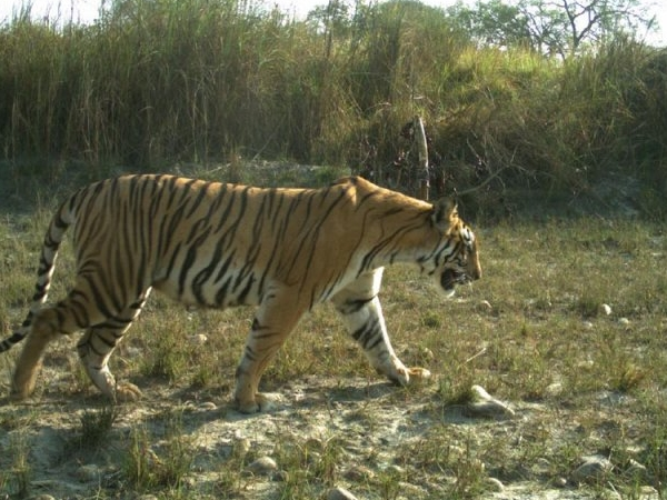 Bardiya National Park 4 Nights/5 Days