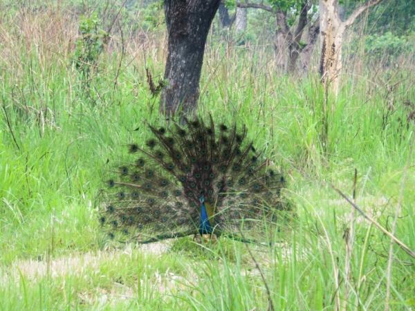 Chitwan National Park 2 Nights/3 Days